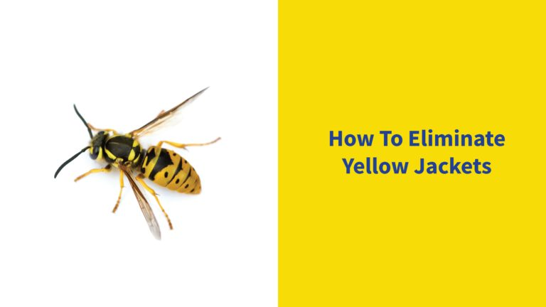 yellow jackets elimination guide