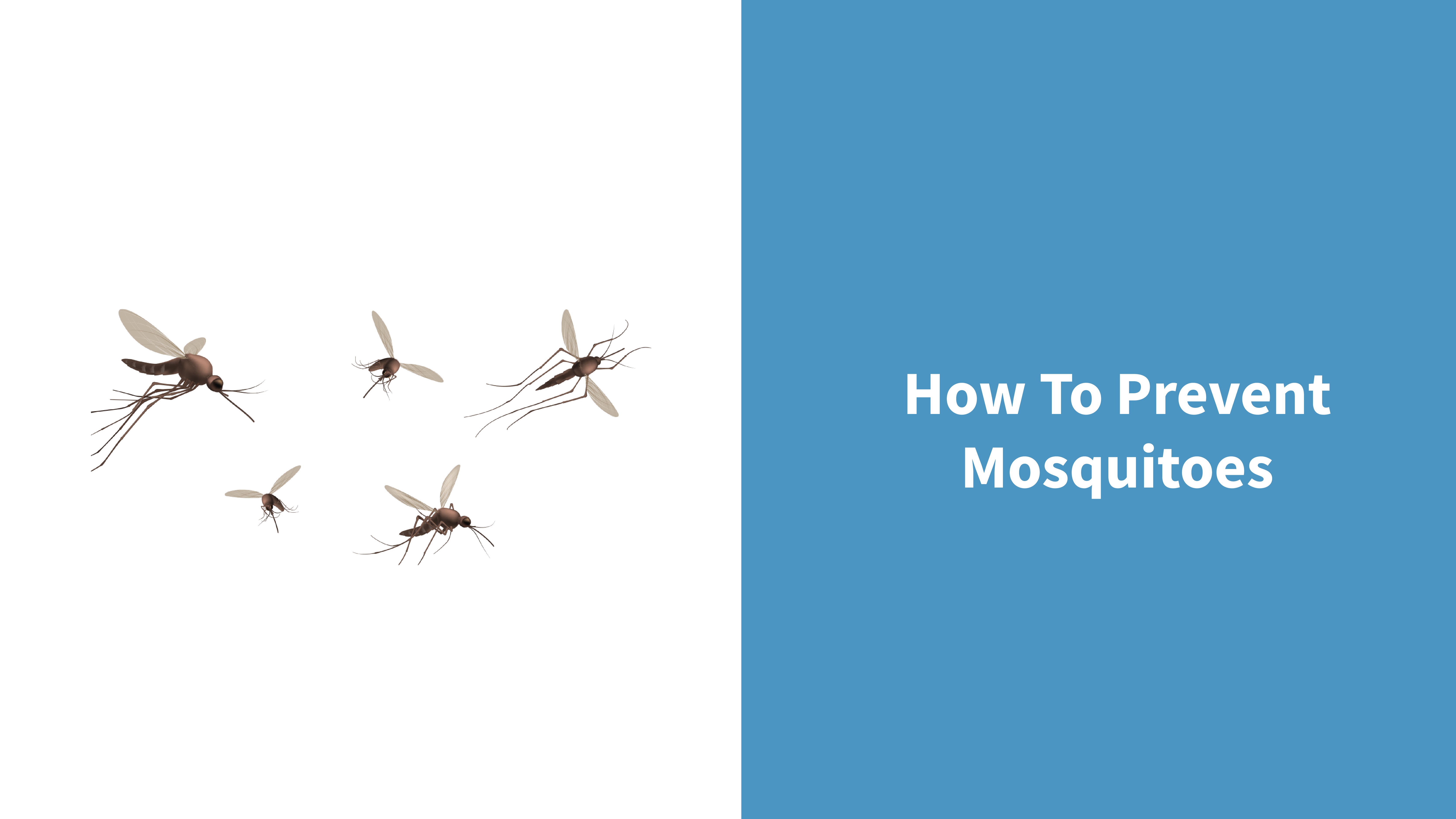 Mosquitoes elimination guide